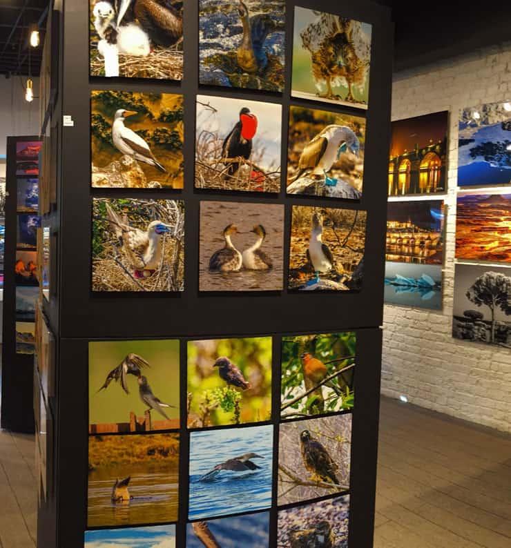 Prewitt Gallery